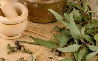 Эвкалипт для детей от кашля: что за растение и как его использовать?