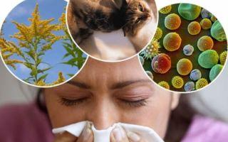 Иммуноглобулин е в норме а дерматит есть