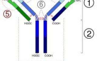Кто из ученых открыл антитела и создал гуморальную теорию иммунитета