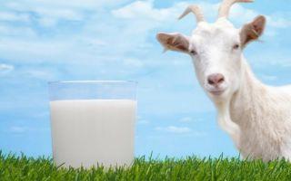 Польза и вред козьего молока для ребенка: правила употребления продукта