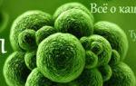 Препарат назначаемый при сухом кашле: как выбрать эффективное лекарство?