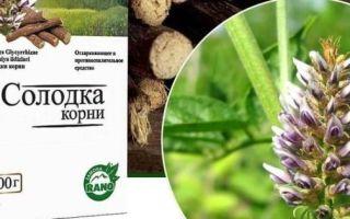 Корень солодки при влажном кашле: польза для организма и правила применения