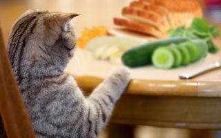 Когда нужна клизма кошке