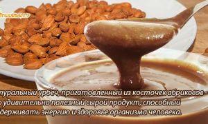 Косточки абрикоса: польза и вред для организма, правила использования