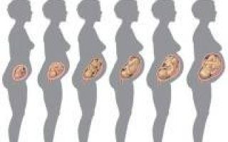 Особенности внутриутробного развития плода