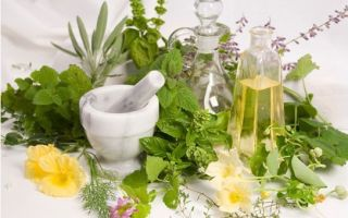 Какой чай пить при повышенном давлении черный или зеленый чай?