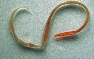 Атопический дерматит от глистов у детей