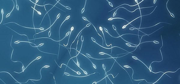 Аллергический дерматит у детей на половых органах
