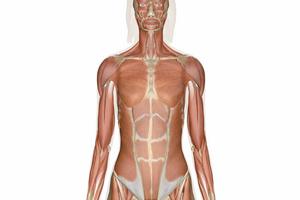 Особенности лестничных мышц