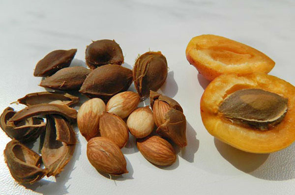 Косточки абрикоса польза и вред для организма