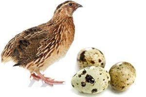 Можно ли при атопическом дерматите перепелиные яйца?
