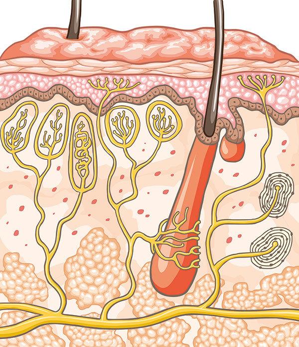 Бепантен мазь или крем при дерматите