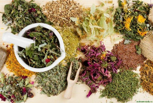 Какие травы для иммунитета и профилактики простуд продаются в аптеке?