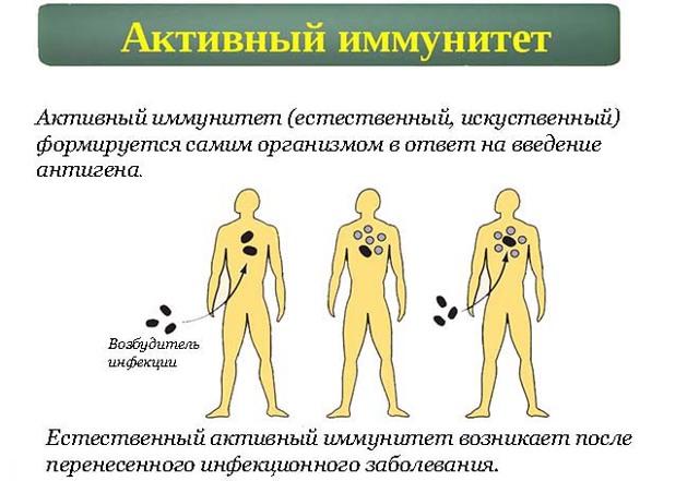 Какие препараты используются для создания активного иммунитета против дифтерии?