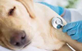 Средства, которые всегда должны быть в аптечке при отравлении у собак