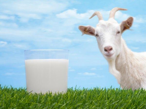 Смесь на основе козьего молока при атопическом дерматите