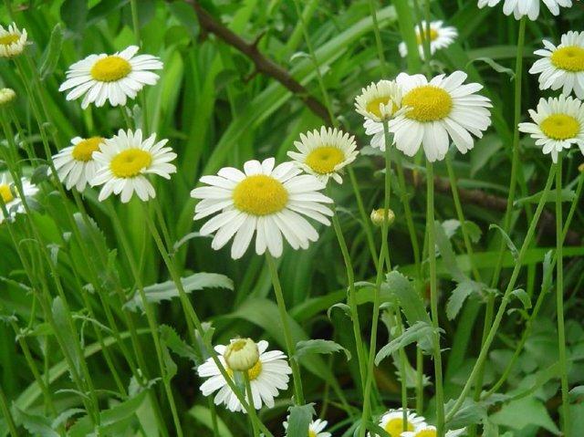 Какие травы помогают травы при дерматите?