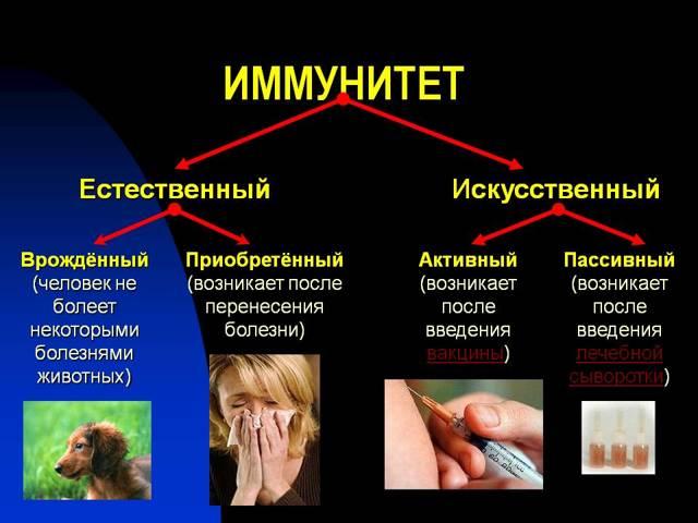 Введение вакцины в организм человека способствует у него выработки иммунитета