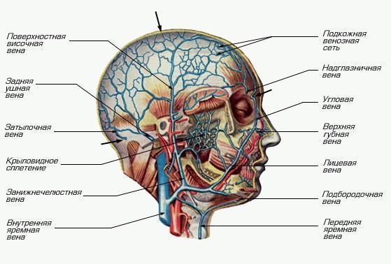 Повышенное давление и головная боль при беременности