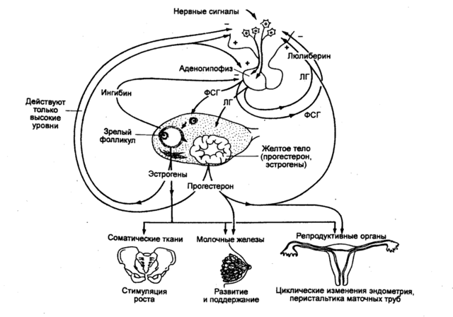 Как избавиться от себорейного дерматита на голове навсегда?