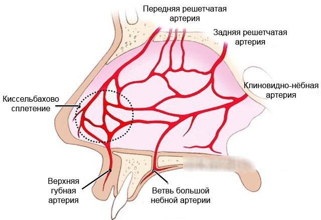 Что делать при кровотечении из носа при повышенном давлении?