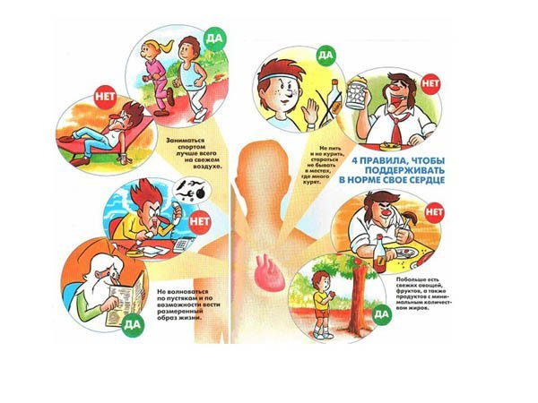 Народные средства при пониженном давлении и повышенном пульсе