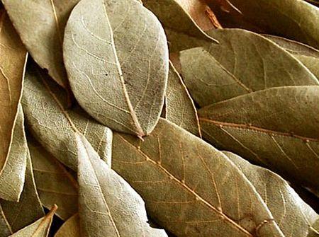 Лавровый лист лечебные свойства и противопоказания от дерматита у грудничка