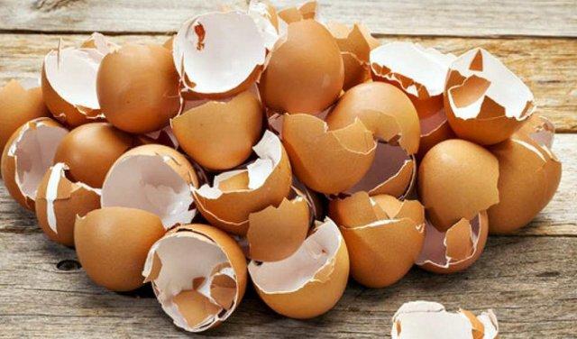 Скорлупа яиц польза и вред приема в пищу