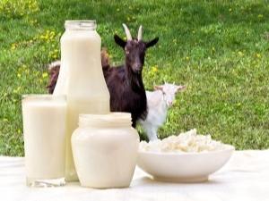 Козье молоко польза и вред для пожилых людей
