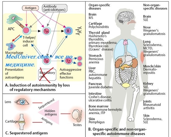 Укажите какие органы и ткани не участвуют в формировании иммунитета