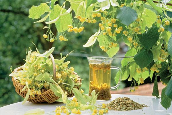 Травы от кашля и простуды