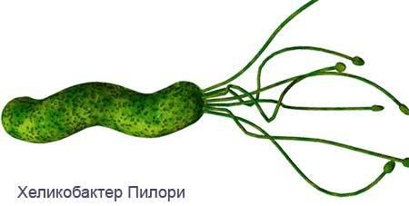 Атопический дерматит и дисбактериоз у взрослых