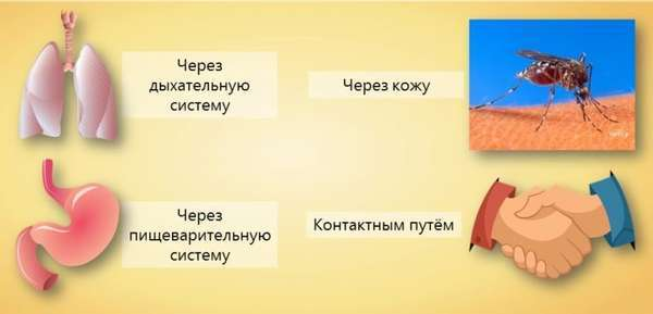 Вирусный дерматит у детей симптомы и лечение