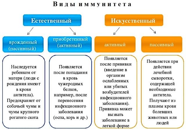 Вид иммунитета возникает в результате введения в организм сыворотки