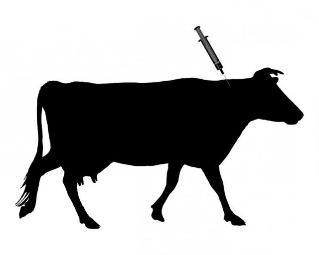 Можно ли пить молоко при нодулярном дерматите?