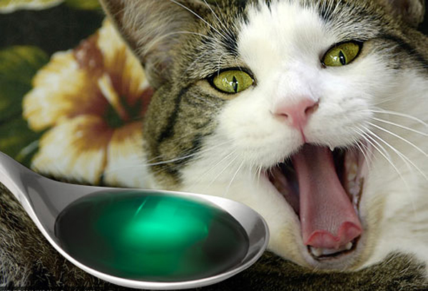 Почему у кошек может произойти отравление