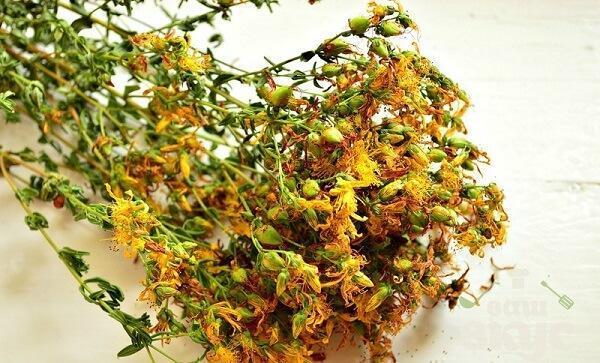 Трава от горла и кашля