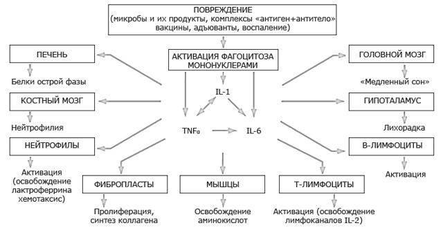 Белки острой фазы воспаления их роль в механизмах врожденного иммунитета
