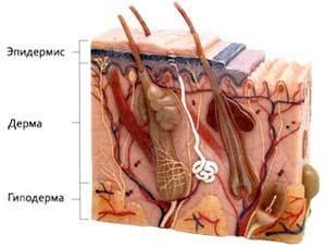 Может ли дерматит перейти в рак кожи