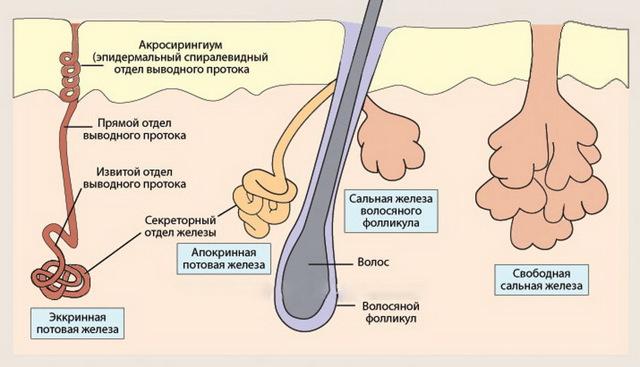 Как избавиться от себорейного дерматита на голове в домашних условиях?