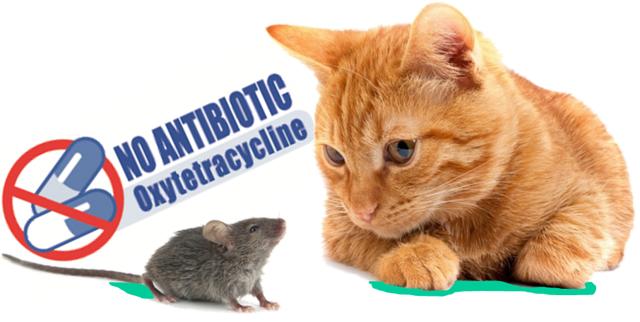 Как лечить грибковый дерматит у котов?